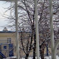 Зимой у нас была зелёная трава, а весной стало белым-бело от снега... :: Нина Корешкова