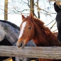 ....просто  лошади... :: Георгий Никонов