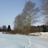 Дорожка в зимний лес :: Валерий Талашов