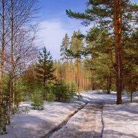 Еле слышно оседает снег... :: Лесо-Вед (Баранов)