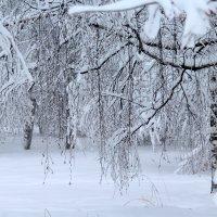 Природа зимой :: Жанна