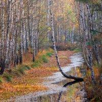 Осень на болоте. :: adrow