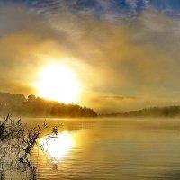 Утренний туман :: Александр