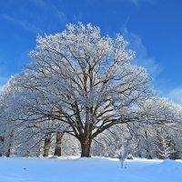 Зима в Чехии :: ИРЭН@ .