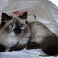 Кот в мешке :: Валентина Гундарева