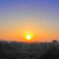 Солнце в тумане :: Алексей Баринов