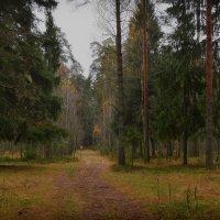 Бродит осень по лесам... :: Алексей (GraAl)