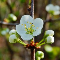 Весна :: Валентина Пирогова