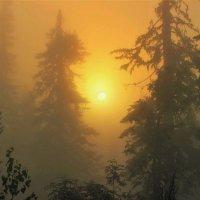 В туманных дебрях восходит солнце :: Сергей Чиняев