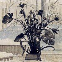 цветы тысячилетия :: Юлия Денискина