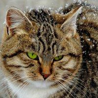 В снежинках :: Попкова Александра