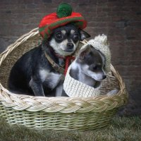 Семейный собачий портрет :: Ирина Приходько