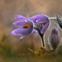 spring :: ian 35AWARDS