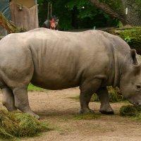 Африканские фауны. :: Mila .