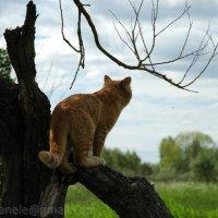 Взор кота :: Elena Gosteva