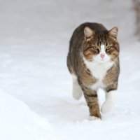 Мартовский кот :: Akkelo _p_