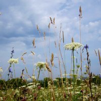 под густою синевою травы пышные растут... :: Галина Флора