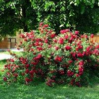 Планета роз и наслажденья :: Татьяна Смоляниченко