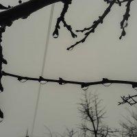 После дождя... :: Юлия Закопайло