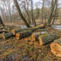 Про деревья 2 :: Владимир Самсонов