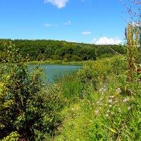 Озеро у дороги... :: Лидия Бараблина