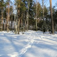 Зимние путешествия по области :: Милешкин Владимир Алексеевич