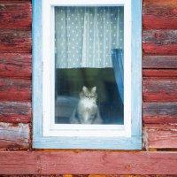 На улице хорошо ,а дома лучше :: Горелов Дмитрий