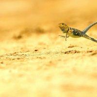 Reptiles :: ian 35AWARDS