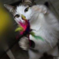 Котя :: Ольга Милованова