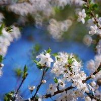 Весна :: Стас
