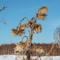 сухая трава :: Ольга (Кошкотень) Медведева