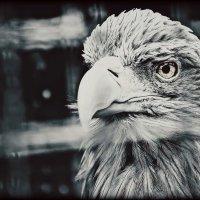 птичка :: Сергей К