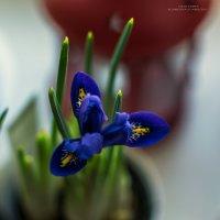 запахло весной :: Екатерина Агаркова