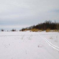 Лыжня :: AleksSPb