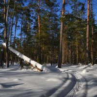 Мартовский лес :: Алексей (GraAl)