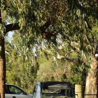 Ретро автомобиль в горной деревушке :: Svetlana Erashchenkova