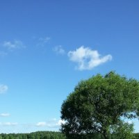 Дерево у пруда. :: swetalana Timofeeva