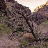 Дерево в ущелье :: Константин Шабалин