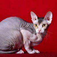 Кошки :: Виктор Твердун