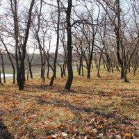 Осенний лес. :: Владимир Усачёв