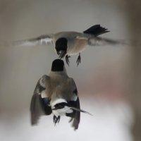 Дозаправка в воздухе :: Светлана Медведева