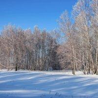 Морозный день в Сибири :: Владимир Деньгуб