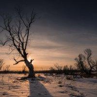 Дерева :: Виктор Четошников