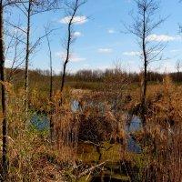 оттаявшее болото :: Александр Прокудин