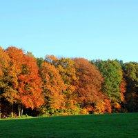 Осенняя палитра :: Olga