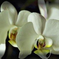 Сказочный цветок :: Nikolay Monahov