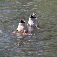 Синхронное плавание. :: Aleksandr