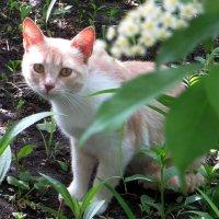 По двору ходила кошка... :: Татьяна Смоляниченко