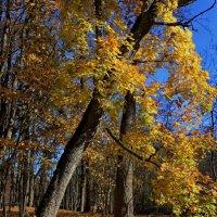 Осенний штрих :: Татьянка *