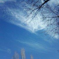 Весеннее небо :: Dana